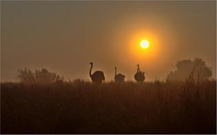 SC-Jnr-Jeandre Prinsloo_Misty Ostrich Sunrise.jpg