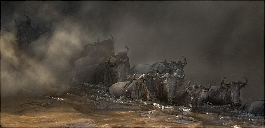 Masai Mara Migration .jpg