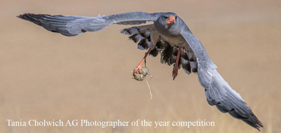 Tania Photog of the year comp copy.jpg