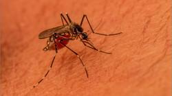 MR-003-Mosquito Life3-2806
