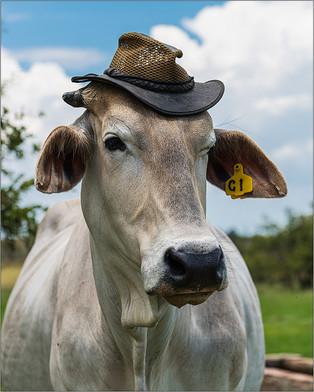 VO-Jnr-Dewald Kleynhans_Cow Farmer.jpg