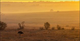 SC-Jnr-Andre Venter_Misty Morning.jpg