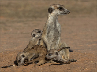 11 Babysit at the burrow.jpg