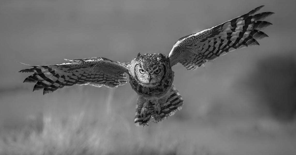 MO-Snr-Elzabe Bogenhofer_Spotted Eagle O