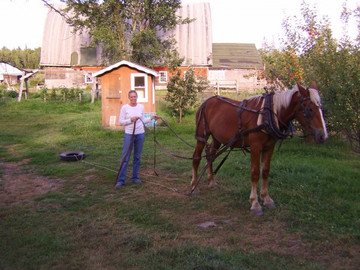 Megan bought her Belgian 'Buckwheat' from Cory's Belgians in Herman, MN as a yearling in late 2007. She broke him to ride and started him on driving.
