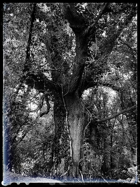 tree 2 b&w.jpeg