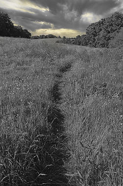 Path in field with clouds.jpg