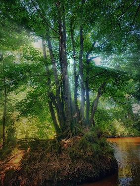 Teign trees.jpg