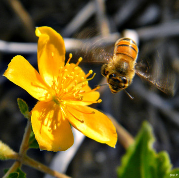Bees, Please!