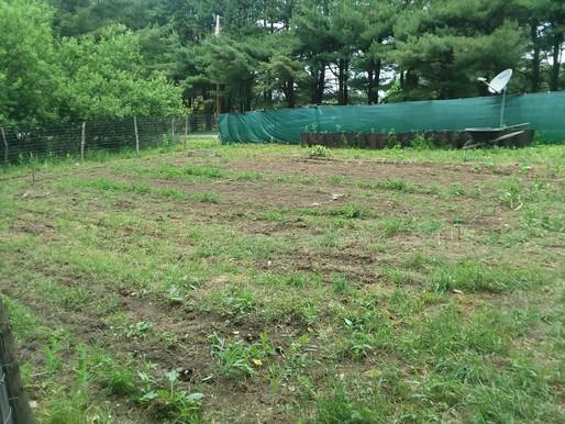 How to Start a Medicinal Garden