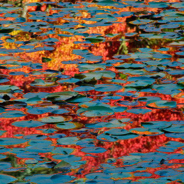Liquid Autumn