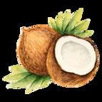 TF. 冷壓初榨椰子油