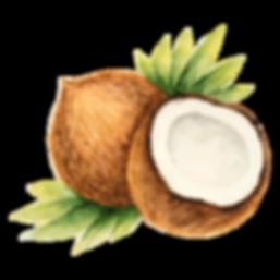 Kokosnoot | De brandstof van je lichaam