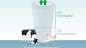 Animal Agriculture uses 1/3 of humanity's fresh water