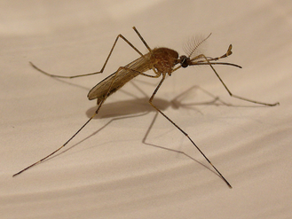 Try going to bed with a mosquito in your room.