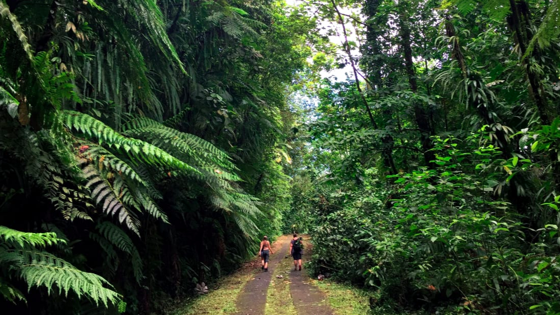 Escape into nature: Trade in sandals for hiking shoes to explore the rainforest at Guadeloupe's National Park. Route de la Traversée provides access to some of the island's natural attractions.