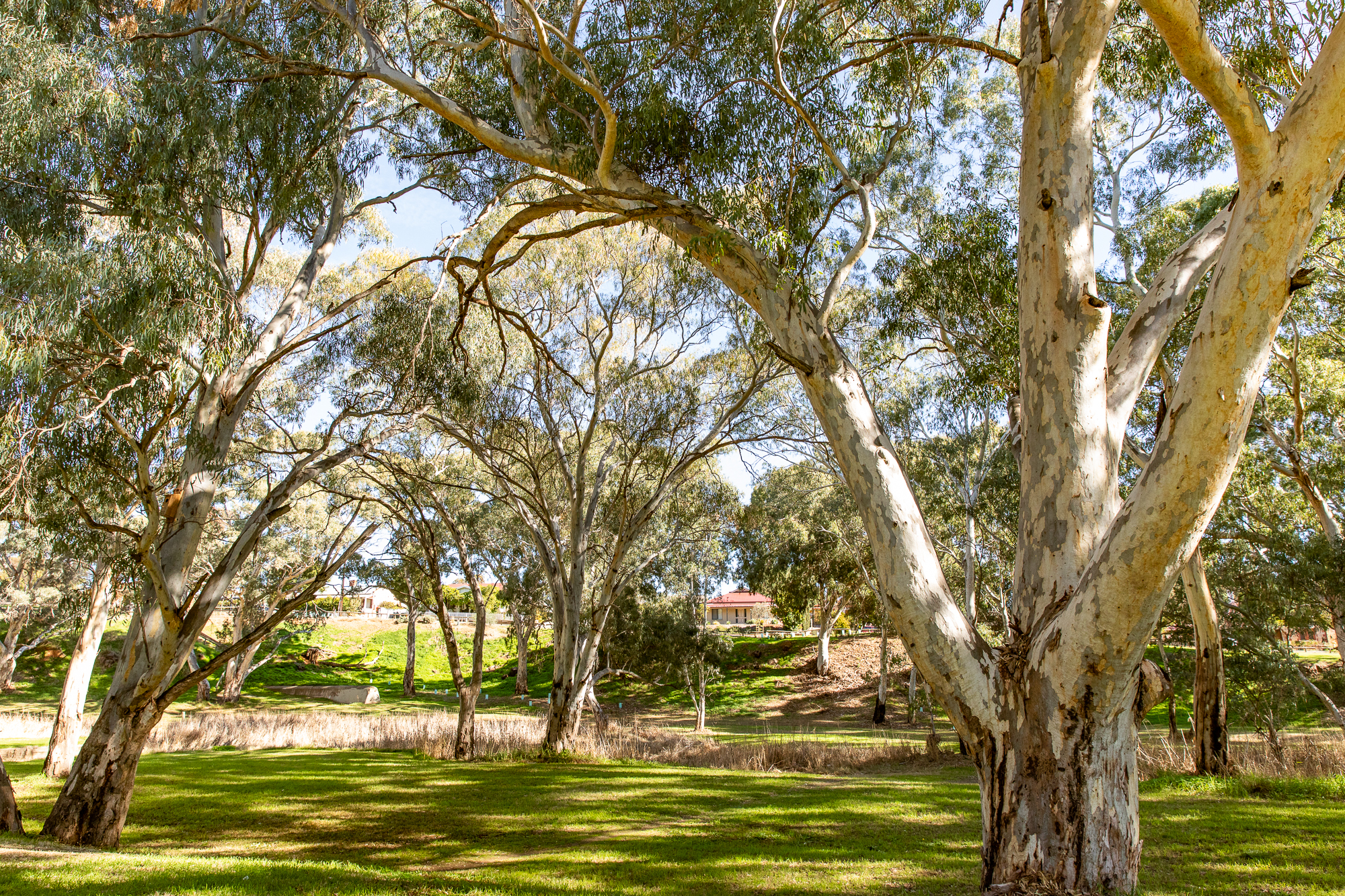 Riverview Gawler View Park