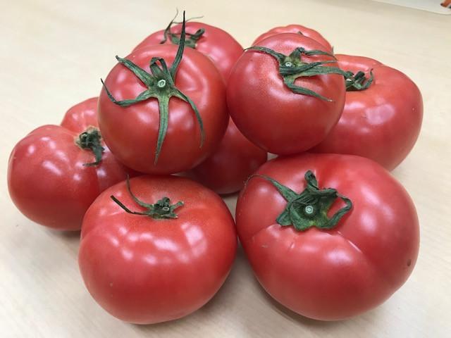 トマトいただきました♪