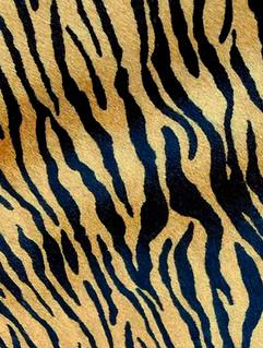 Tigre Romeu Bege