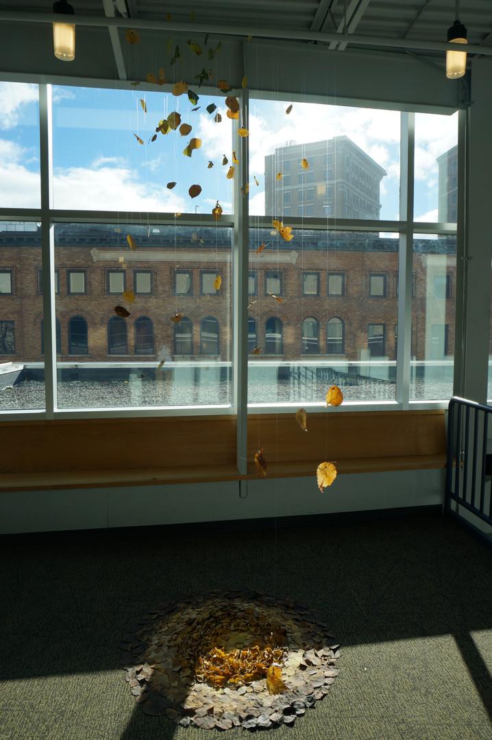 3,方小龙·装置·自然树叶·《落叶归根》2·尺幅可变.JPG