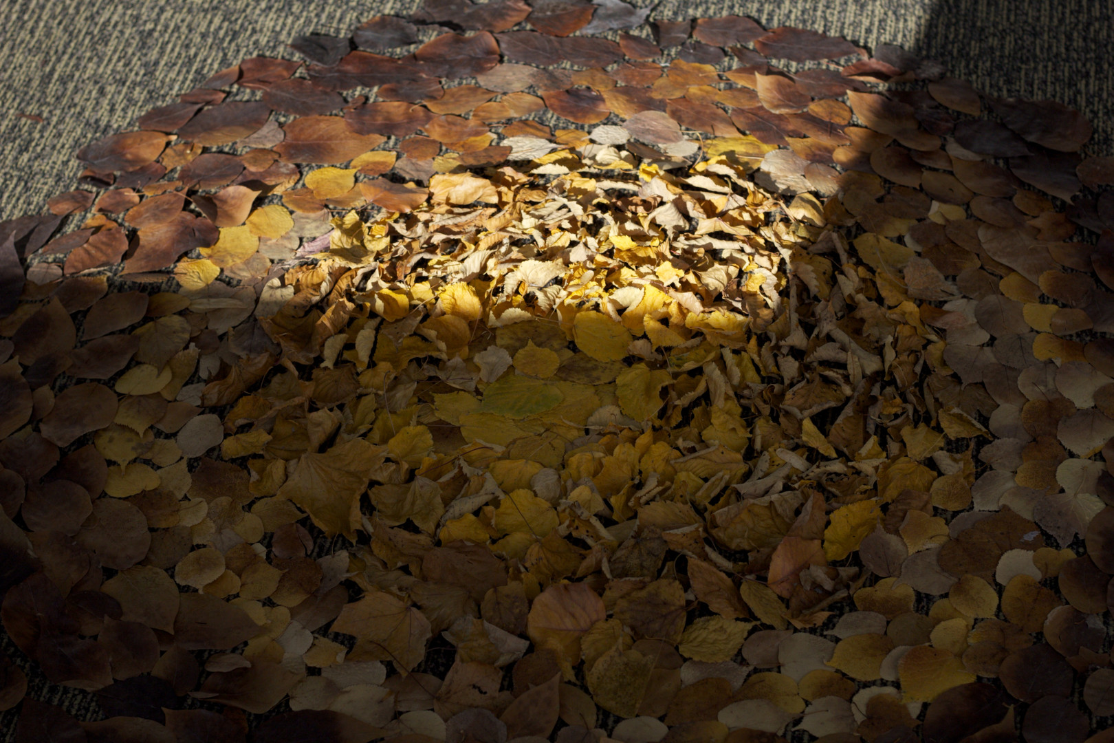 8,方小龙·装置·自然树叶·《落叶归根》7·尺幅可变.jpg