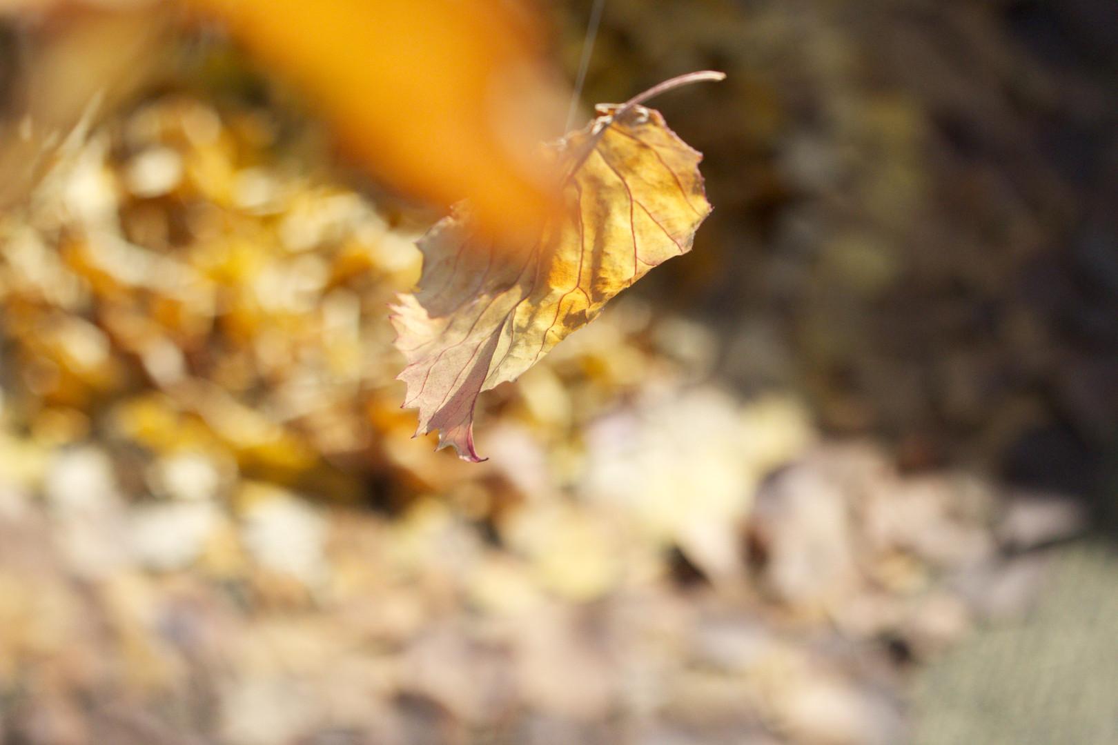 14,方小龙·装置·自然树叶·《落叶归根》13·尺幅可变.jpg