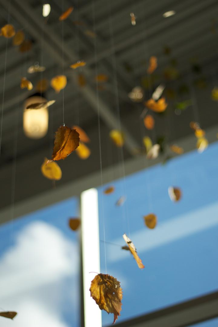 11,方小龙·装置·自然树叶·《落叶归根》10·尺幅可变.jpg