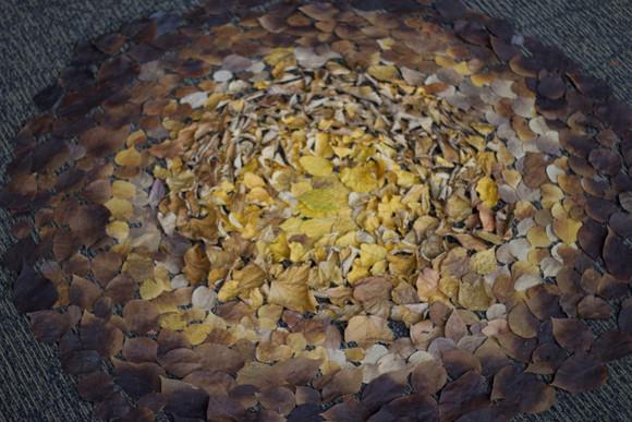 7,方小龙·装置·自然树叶·《落叶归根》6·尺幅可变.jpg
