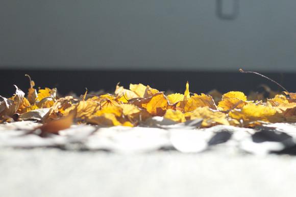 15,方小龙·装置·自然树叶·《落叶归根》14·尺幅可变.jpg