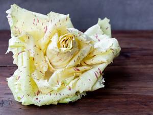 Beautiful garden rose? No! It's Radicchio!