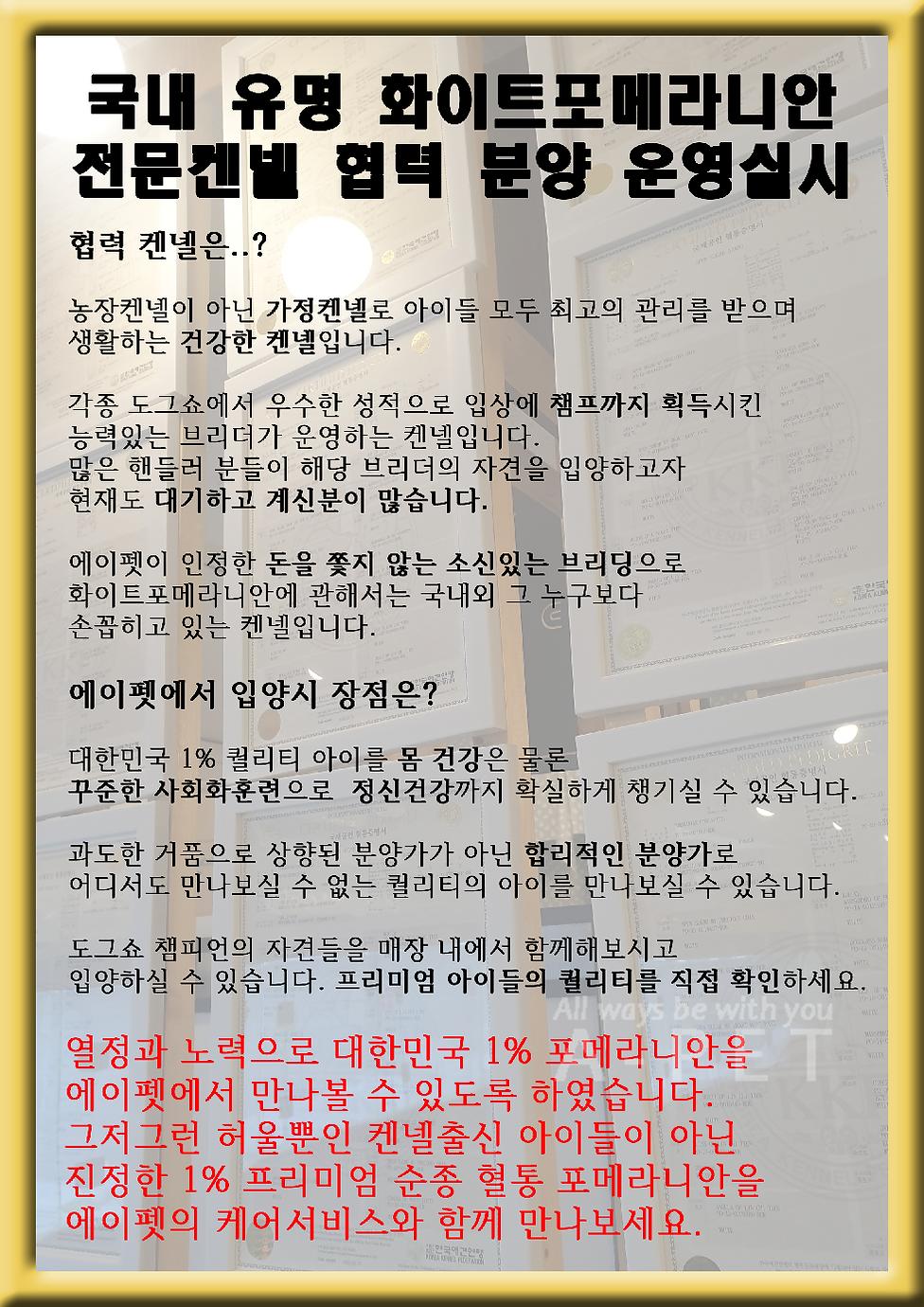 혈통포메 글.png