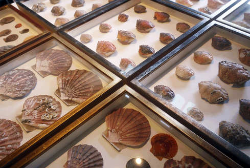 collection of crabshells floarted in box frames