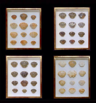 crab shells in gilded box frames