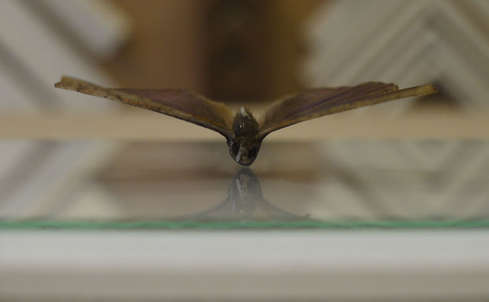 butterfly mounted on glass