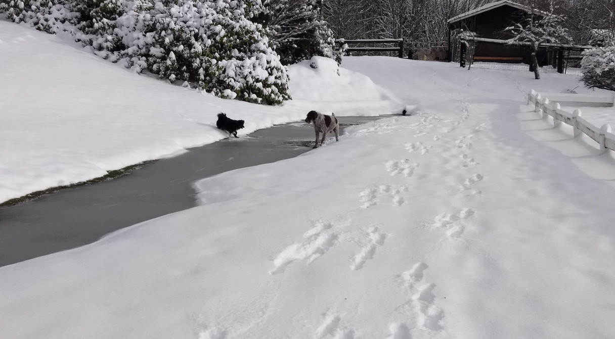 Trigger and Bear playing with first steps in winter 2019 snowfall...
