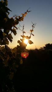 Levé de soleil estival