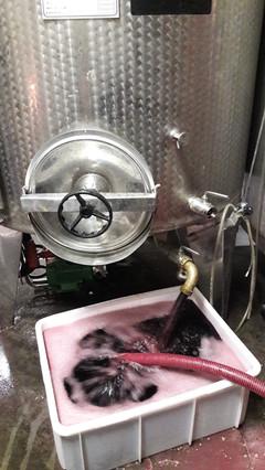 Soutirage du Pinot Noir