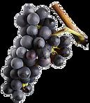 Pinot Noir.png