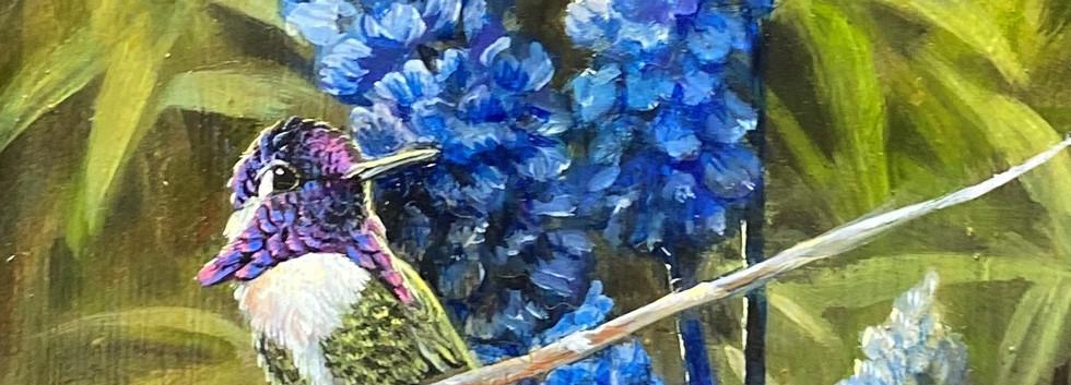 Costa's Hummingbird with Flowers