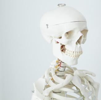 Skelett Funktionsmodell