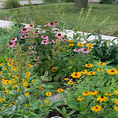 We create pollinator gardens