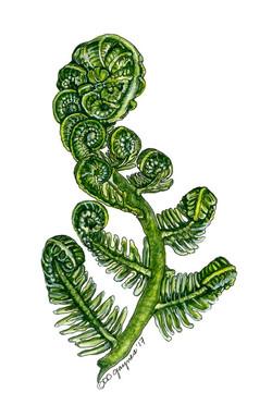 Fiddle leaf fern
