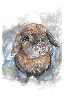 Marta's Rabbit