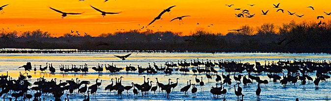 Cranes6.jpg