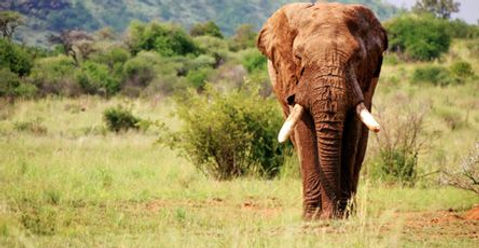 Africa elephant.jpg