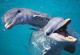 gulf dolphin cruise.jpg