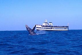Gulf bellengrath.jpg
