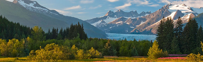 Juneau, fireweed and Mendenhall Glacier.