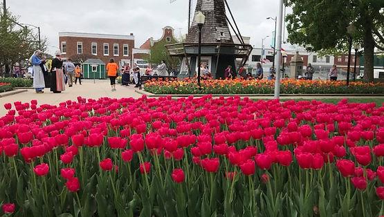 pella tulips4.jpg
