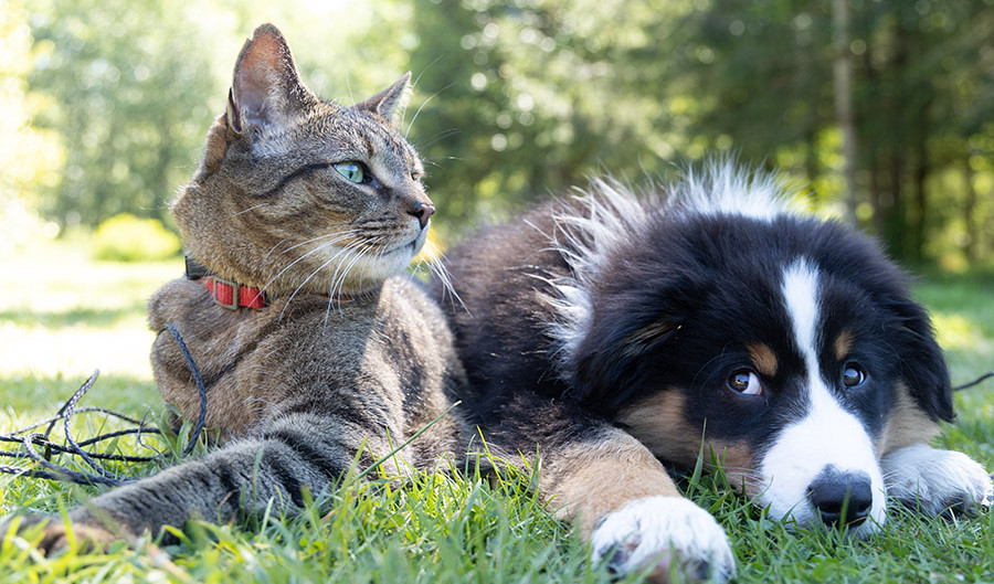Are Pets Catching Covid-19 From their Owners?